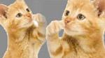 ملاكمة ولكن هذه المرة بين قطط !!